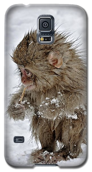 Yummy? Galaxy S5 Case