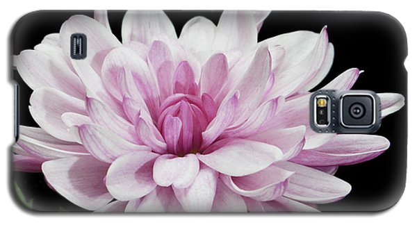 Galaxy S5 Case featuring the photograph Yummy Mummy by Terence Davis
