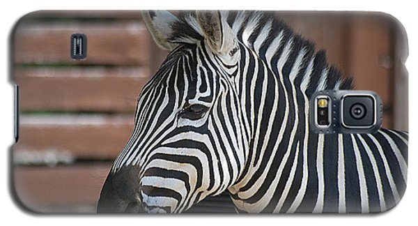 Galaxy S5 Case featuring the photograph Zebra 20120718_150a by Tina Hopkins