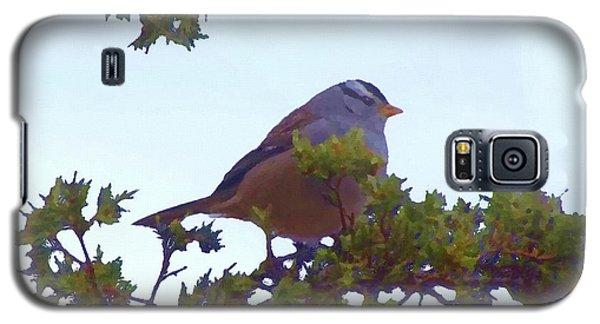 White Crowned Sparrow In Cedar Galaxy S5 Case