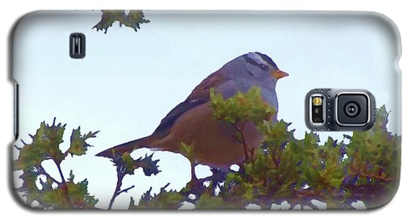 White Crowned Sparrow In Cedar Galaxy S5 Case