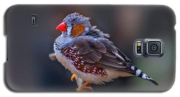 Zebra Finch Galaxy S5 Case