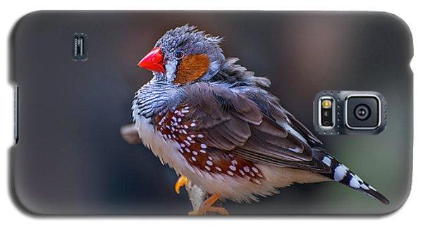 Zebra Finch Galaxy S5 Case