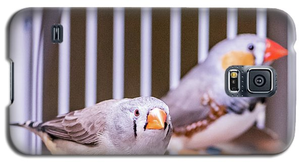 Zebra Finch Pair Galaxy S5 Case