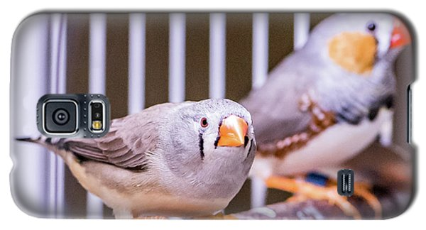 Zebra Finch Pair Galaxy S5 Case