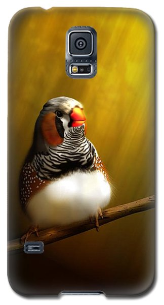 Zebrafinch Portrait Galaxy S5 Case by John Wills