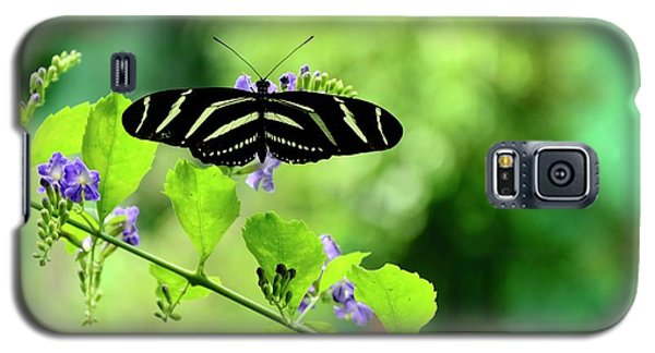 Galaxy S5 Case featuring the photograph Zebra Longwing Butterfly by Corinne Rhode