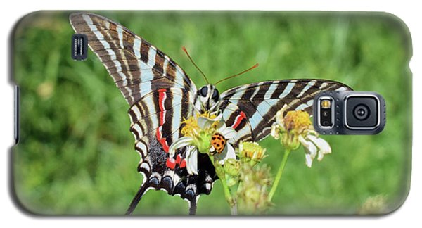 Zebra Swallowtail And Ladybug Galaxy S5 Case