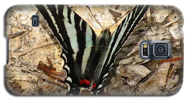 Galaxy S5 Case featuring the photograph Zebra Swallowtail by Donna Brown