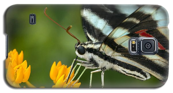 Zebra Swallowtail Drinking On The Fly Galaxy S5 Case
