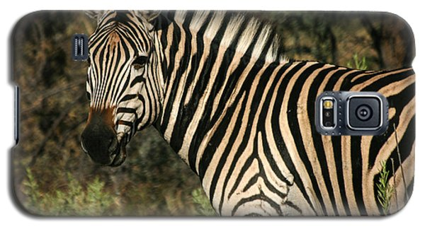 Zebra Watching Galaxy S5 Case