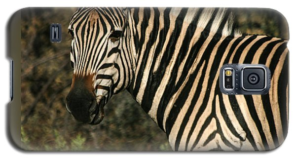 Zebra Watching Sq Galaxy S5 Case