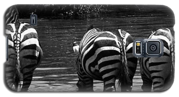 Zebras Cautiously Drinking Galaxy S5 Case by Darcy Michaelchuk