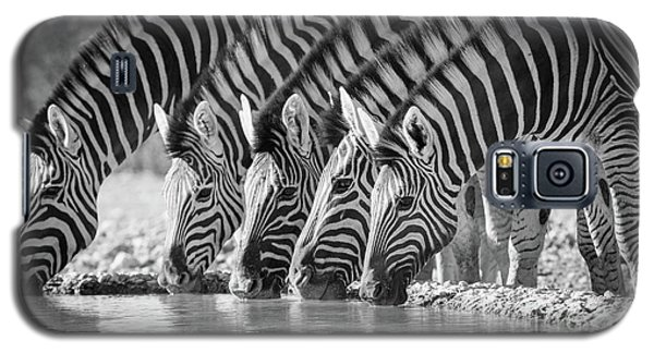 Zebras Drinking Galaxy S5 Case