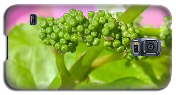 #zinfandel #wine #grapes Baby Buds Galaxy S5 Case by Shari Warren