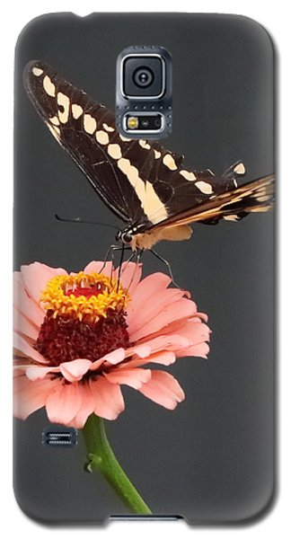 Zinnia With Butterfly 2702 Galaxy S5 Case