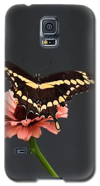 Zinnia With Butterfly 2708  Galaxy S5 Case