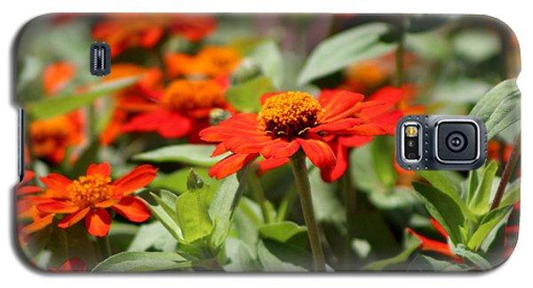 Zinnias In Autumn Colors Galaxy S5 Case