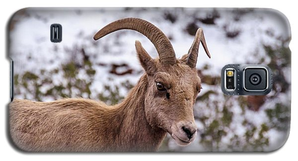 Zion Bighorn Sheep Close-up Galaxy S5 Case