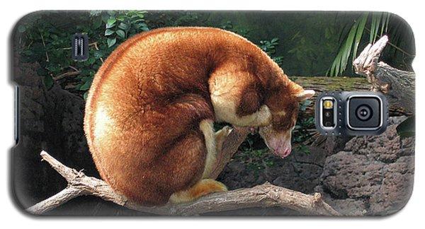 Zoo Animal Galaxy S5 Case