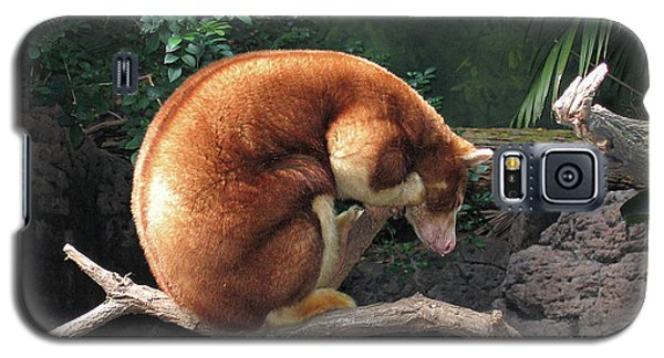 Galaxy S5 Case featuring the photograph Zoo Animal by Suhas Tavkar