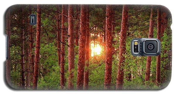 010 - Pine Sunset Galaxy S5 Case