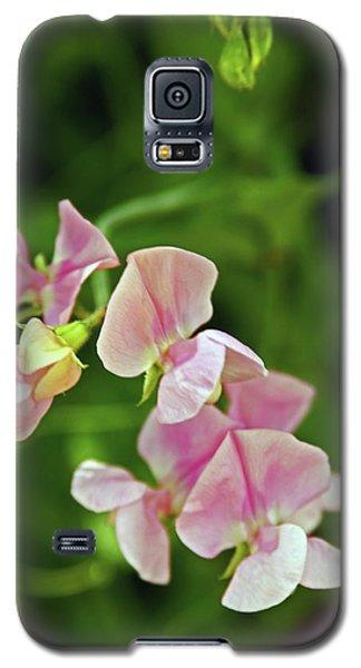 21/07/14  Chorley.  Astley Hall. Galaxy S5 Case