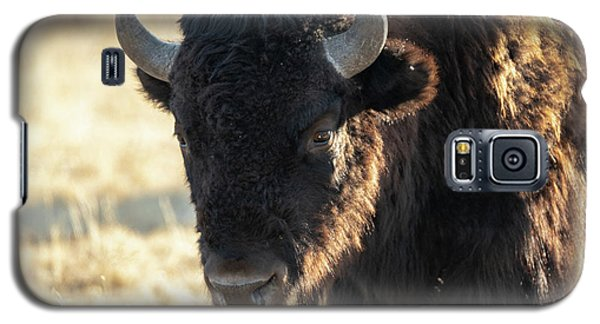 American Bison Galaxy S5 Case