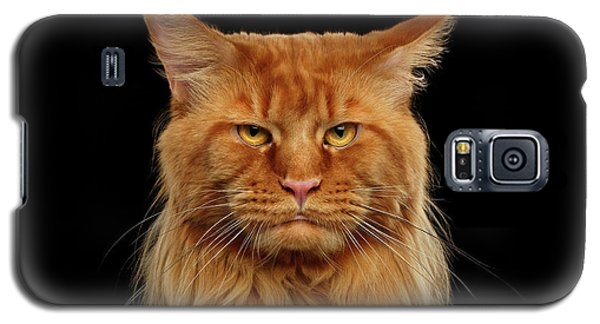 Angry Ginger Maine Coon Cat Gazing On Black Background Galaxy S5 Case