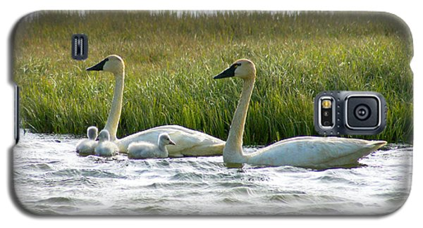 Arctic Tundra Swans And Cygnets Galaxy S5 Case