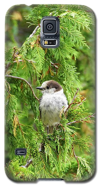 Camprobber - The Gray Jay Galaxy S5 Case