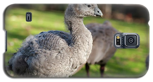 Cape Barren Goose And Geese Galaxy S5 Case