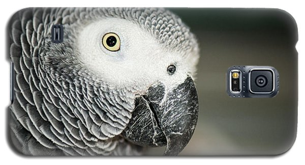 Close Up Of An African Grey Parrot Galaxy S5 Case