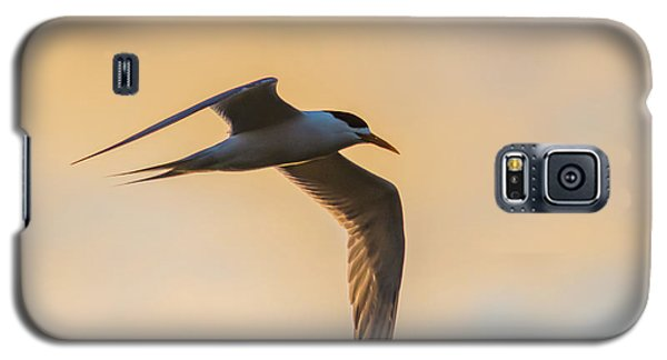 Crested Tern In The Early Morning Light Galaxy S5 Case