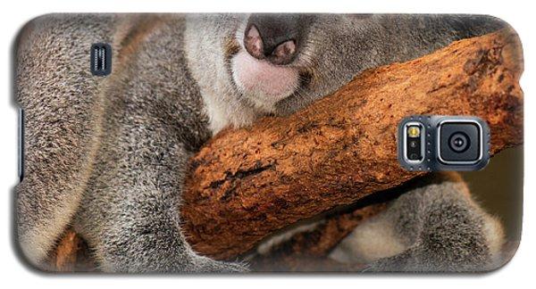 Cute Australian Koala Resting During The Day. Galaxy S5 Case