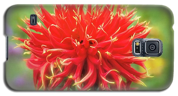 Glorious Sho-n-tell Dahlia Galaxy S5 Case