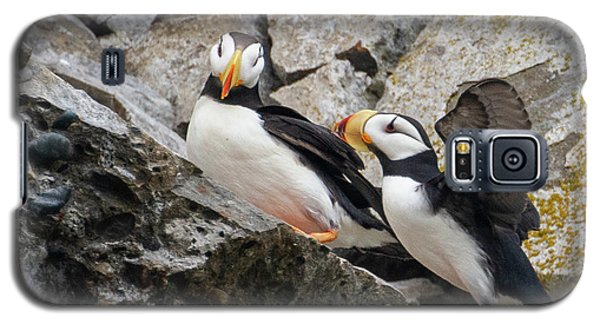 Horned Puffin Pair 2 Galaxy S5 Case