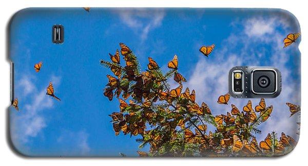 Branch Galaxy S5 Case - Monarch Butterflies On Tree Branch In by Jhvephoto