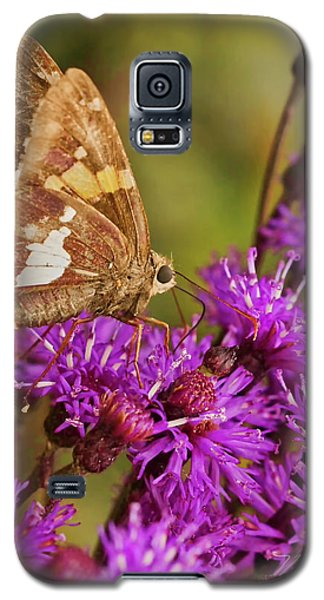 Moth On Purple Flowers Galaxy S5 Case