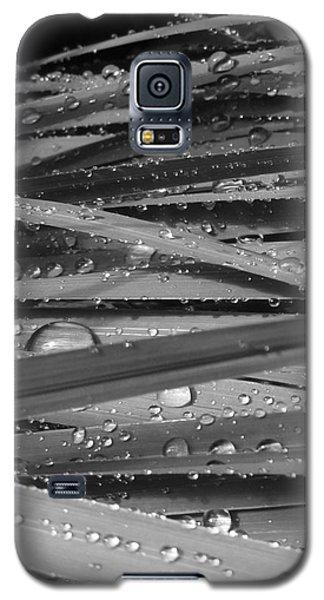 Rain On Siberian Iris Galaxy S5 Case