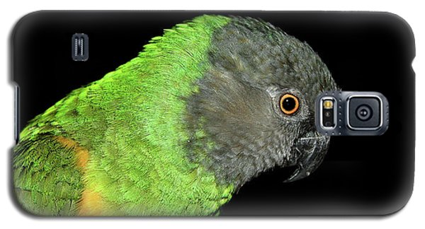 Senegal Parrot Galaxy S5 Case