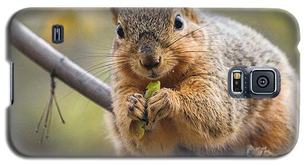 Snacking Squirrel Galaxy S5 Case