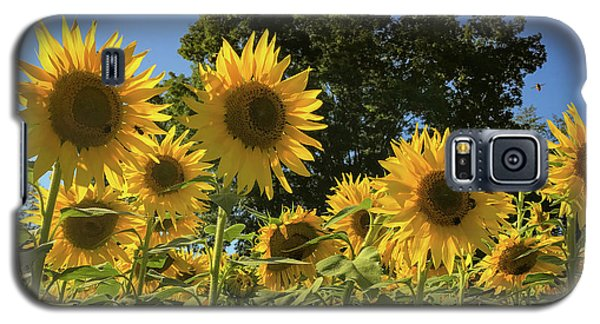 Sunlit Sunflowers Galaxy S5 Case