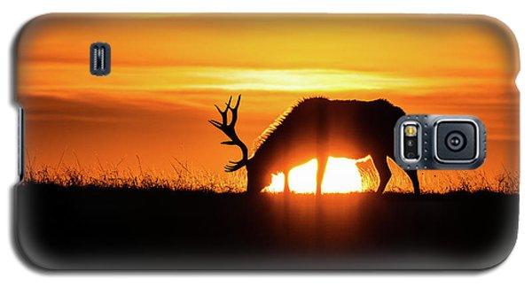 Sunrise Elk Galaxy S5 Case