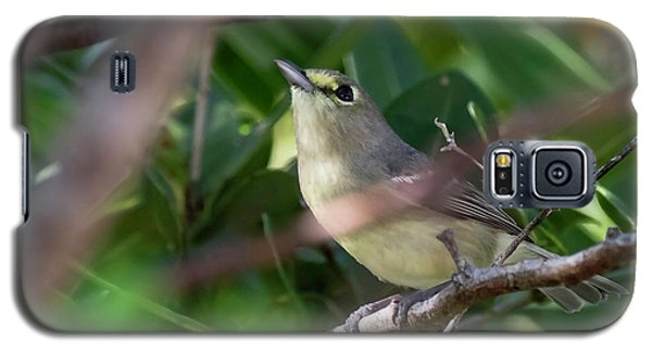 Thick-billed Vireo Galaxy S5 Case