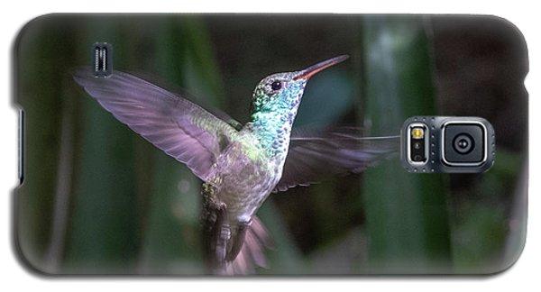 Versicolored Emerald Hummingbird Hovers Galaxy S5 Case