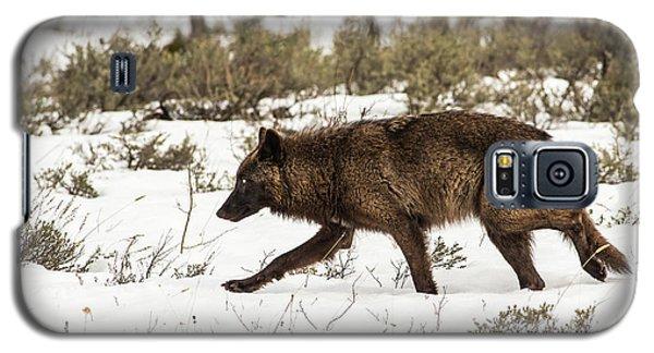 W10 Galaxy S5 Case