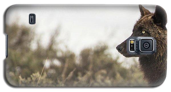 W15 Galaxy S5 Case