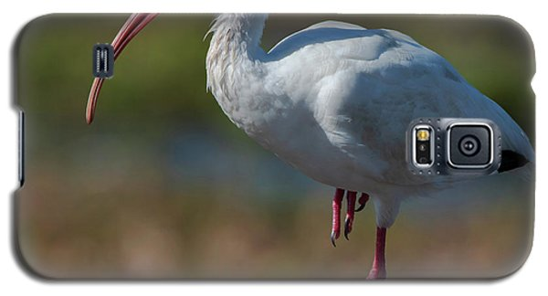 White Ibis Galaxy S5 Case