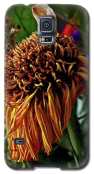 12-7-2008img1857a Galaxy S5 Case
